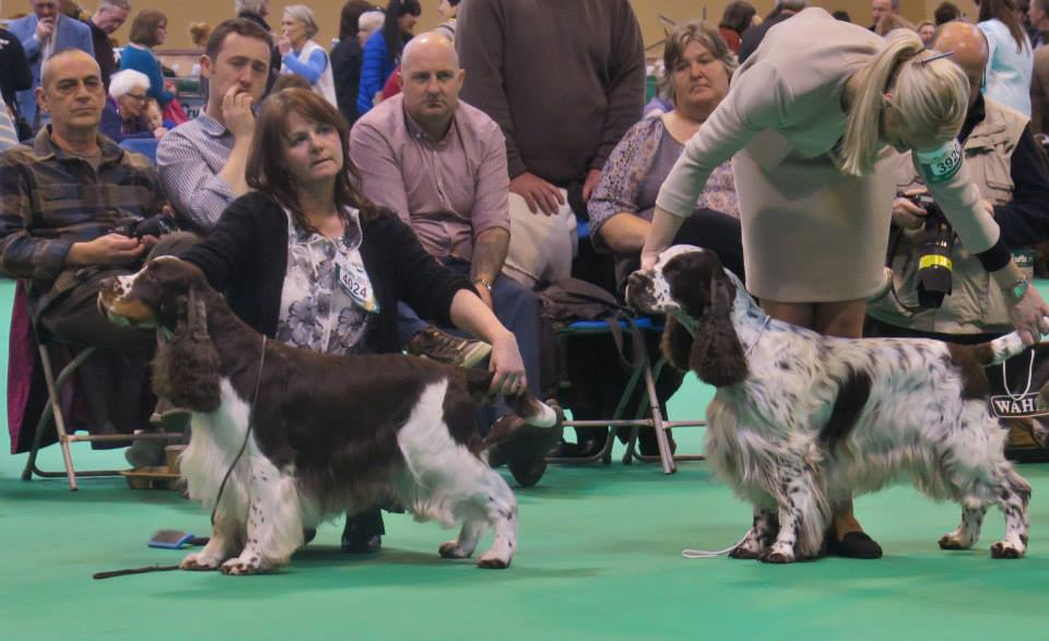 Rafferty crufts 1